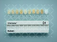 Расцветка Charisma Kulzer (Харизма Кюльзер)